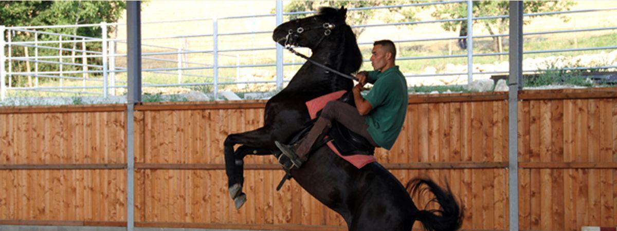 Loves Horses